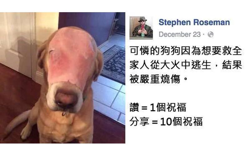 他把这张「火烧毁容狗狗」照片上传后引起10万人分享祝福,但是没多久