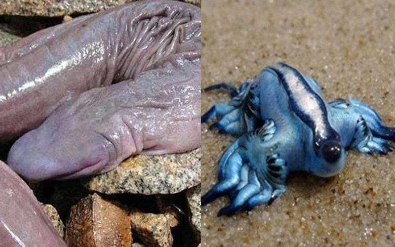 世界上超奇異的5種生物,尤其是第五種…..  -