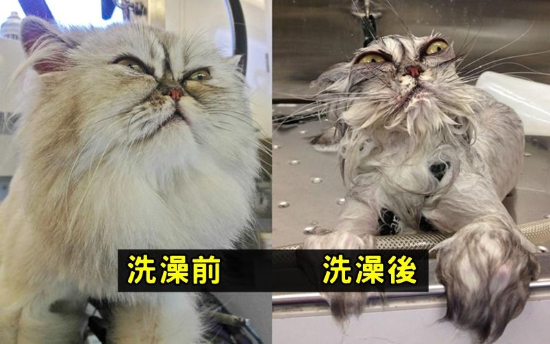 寵物為什麼都不愛洗澡?看完這些圖你就明白了XDD