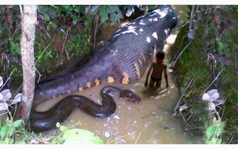盤點13組讓人聞之喪膽的蛇照片,第十一張太恐怖了啦..