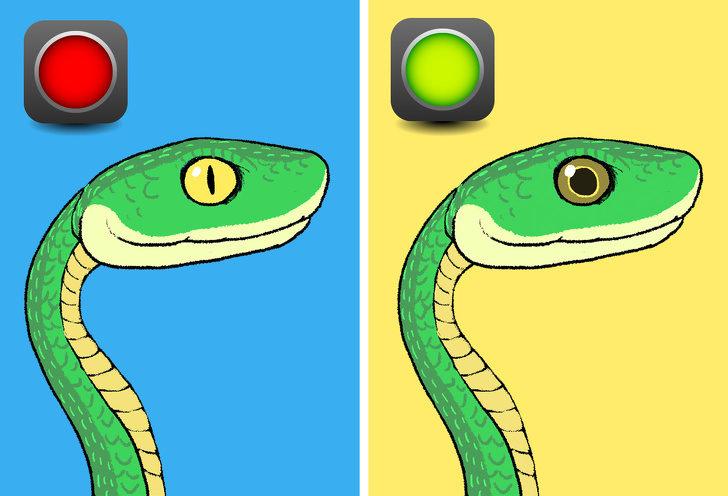 虽然不是每一个人都可以很常看到蛇,但是至少要学会如何判断蛇有没有毒。下次真的不幸遇到蛇,你也才不会吓到头脑一片空白!因为蛇的毒液是非常危险的,如果能够及时避开就可以救自己一命! 1. 首先可以注意蛇的眼睛形状,只要是细长形的就几乎都是毒蛇!只有少数如非洲的黑曼巴蛇和一些中东、亚洲地区部分有毒的蛇会有圆瞳孔。至於像是紫沙蛇这种本来是圆的,突然变成细长形就不必过於害怕,因为那是无毒蛇要吓阻攻击者的招式。  2.