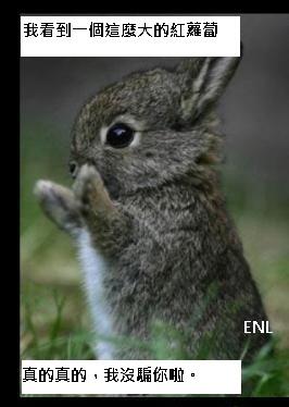 兔子不會說謊。-0