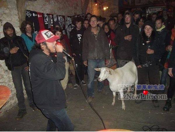 墨西哥的羊,下班都在幹嘛。-0
